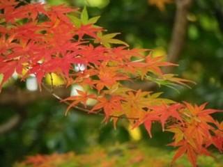 大阪の紅葉スポットを探しましょう。見ごろはいつかな。